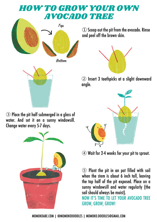 Momoko-Abe_How-To-Grow-An-Avocado-Tree_720
